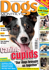 Dogs Monthly Feb 2012